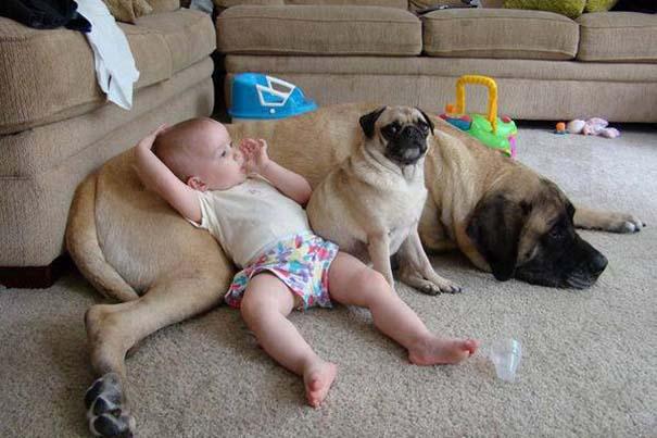 Μωρά με σκύλους: Ένας ακαταμάχητος συνδυασμός (7)