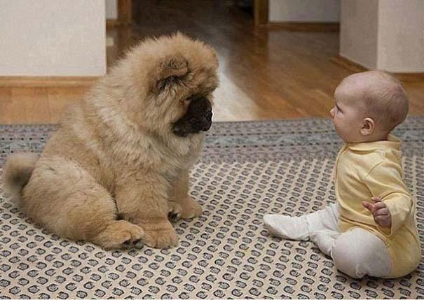Μωρά με σκύλους: Ένας ακαταμάχητος συνδυασμός (12)