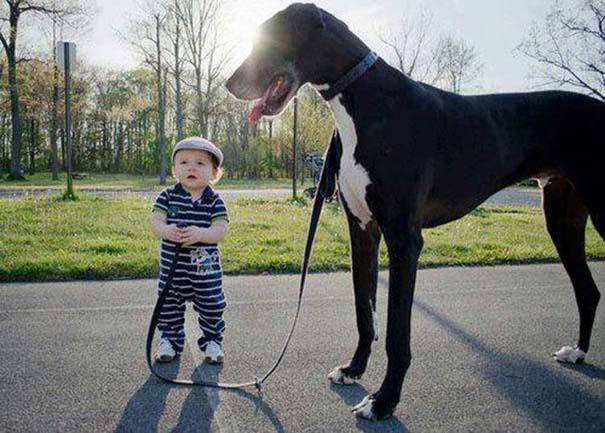Μωρά με σκύλους: Ένας ακαταμάχητος συνδυασμός (20)