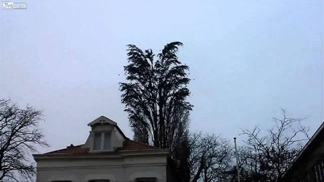 Όταν εκατοντάδες πουλιά απογειώνονται από ένα δένδρο