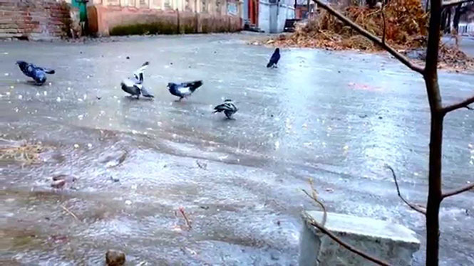 Περιστέρια στον πάγο