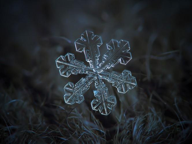 Η τέλεια χιονονιφάδα | Φωτογραφία της ημέρας