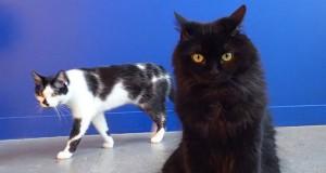 8 σημάδια που δείχνουν ότι η γάτα σας σχεδιάζει την εξόντωση σας (Video)