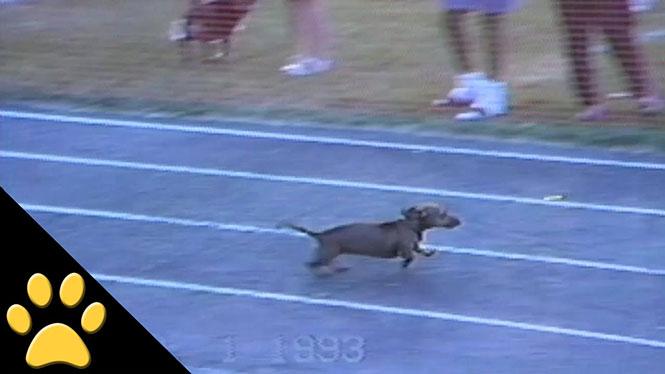 Σκύλος κλέβει με απίστευτο τρόπο για να κερδίσει αγώνα δρόμου