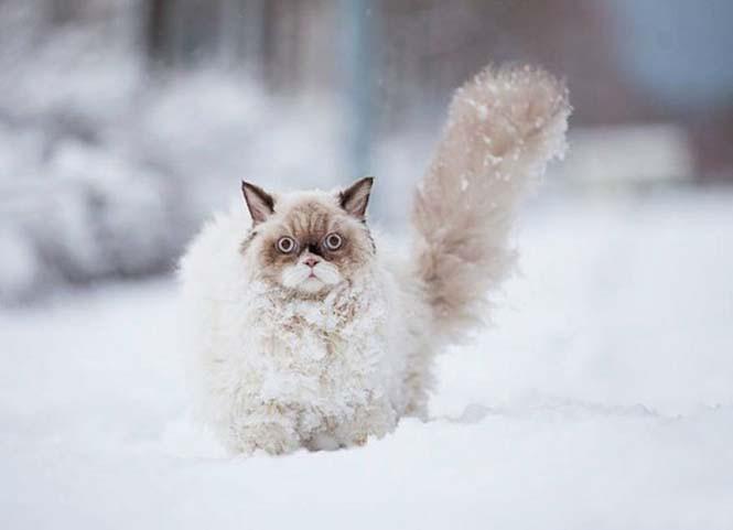 Γάτα δείχνει τα 3 στάδια της πρώτης εμπειρίας με το χιόνι (1)