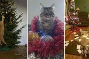 Κατοικίδια που μισούν τα Χριστούγεννα (1)