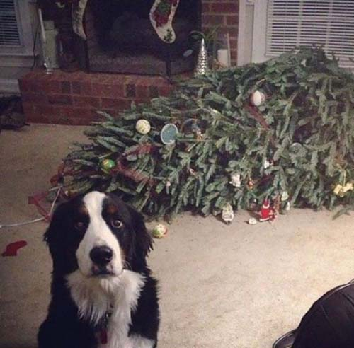Κατοικίδια που μισούν τα Χριστούγεννα (2)