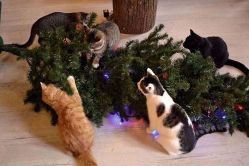 Κατοικίδια που μισούν τα Χριστούγεννα (4)