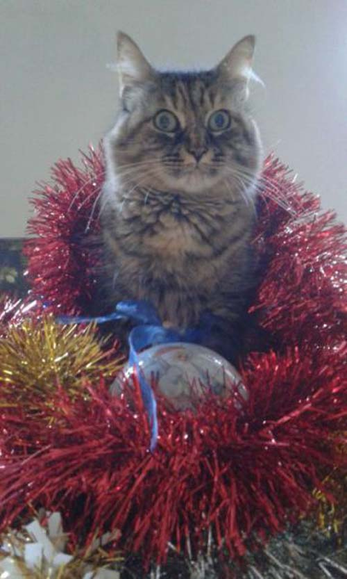 Κατοικίδια που μισούν τα Χριστούγεννα (5)