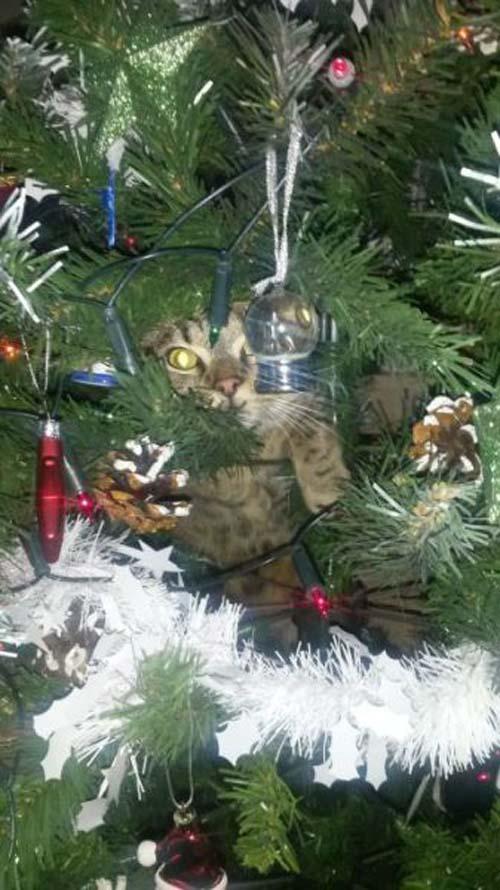 Κατοικίδια που μισούν τα Χριστούγεννα (6)