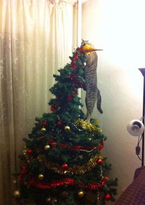 Κατοικίδια που μισούν τα Χριστούγεννα (7)