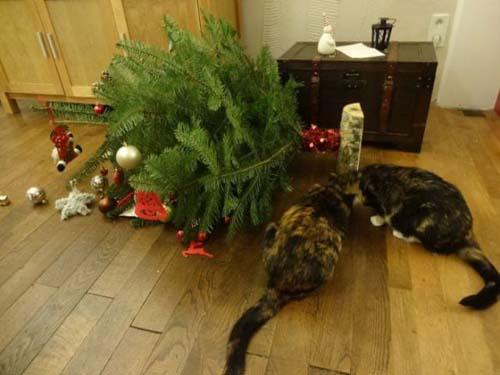 Κατοικίδια που μισούν τα Χριστούγεννα (8)