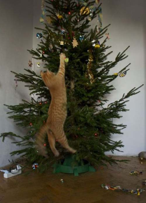Κατοικίδια που μισούν τα Χριστούγεννα (9)