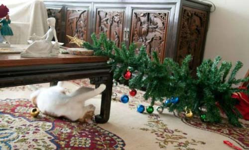 Κατοικίδια που μισούν τα Χριστούγεννα (10)