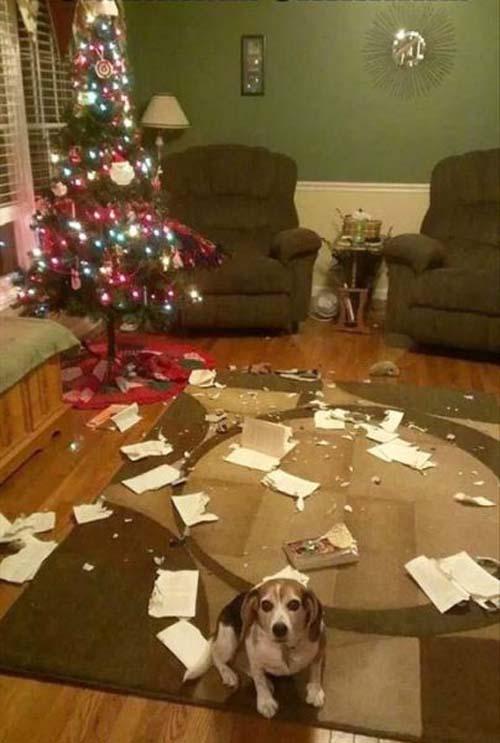 Κατοικίδια που μισούν τα Χριστούγεννα (11)