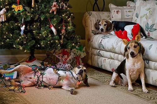 Κατοικίδια που μισούν τα Χριστούγεννα (13)