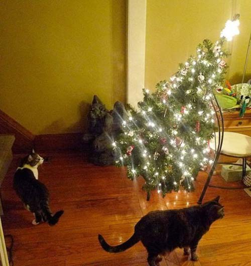 Κατοικίδια που μισούν τα Χριστούγεννα (15)