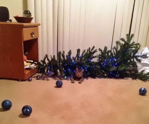 Κατοικίδια που μισούν τα Χριστούγεννα (17)