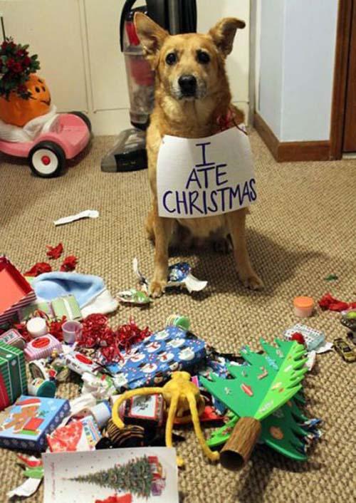 Κατοικίδια που μισούν τα Χριστούγεννα (18)