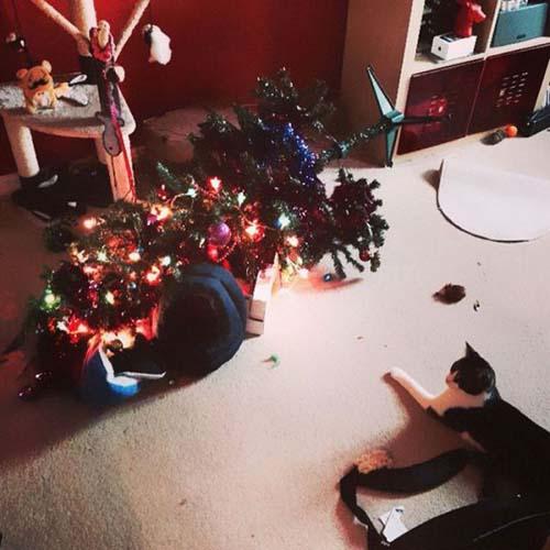 Κατοικίδια που μισούν τα Χριστούγεννα (19)