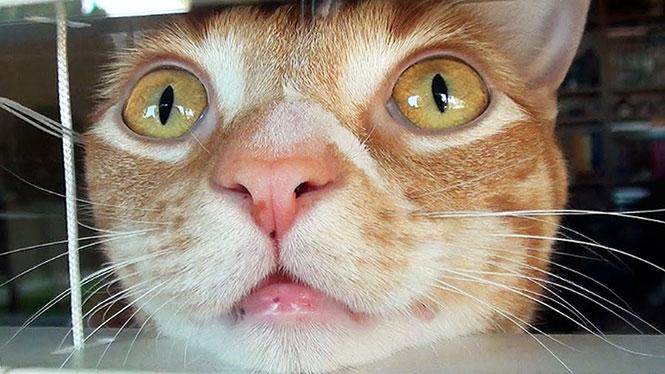 Ο κόσμος όπως τον αντιλαμβάνονται οι γάτες