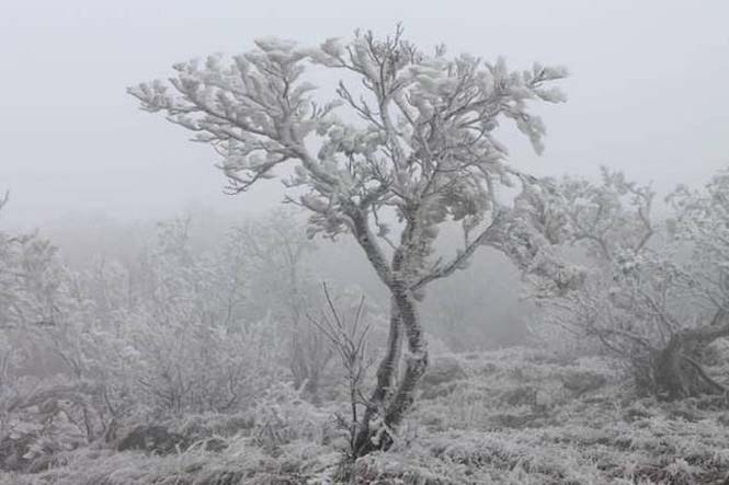 Παγωμένη ομίχλη μετέτρεψε τα πάντα σε σουρεαλιστικό τοπίο από πάγο (3)