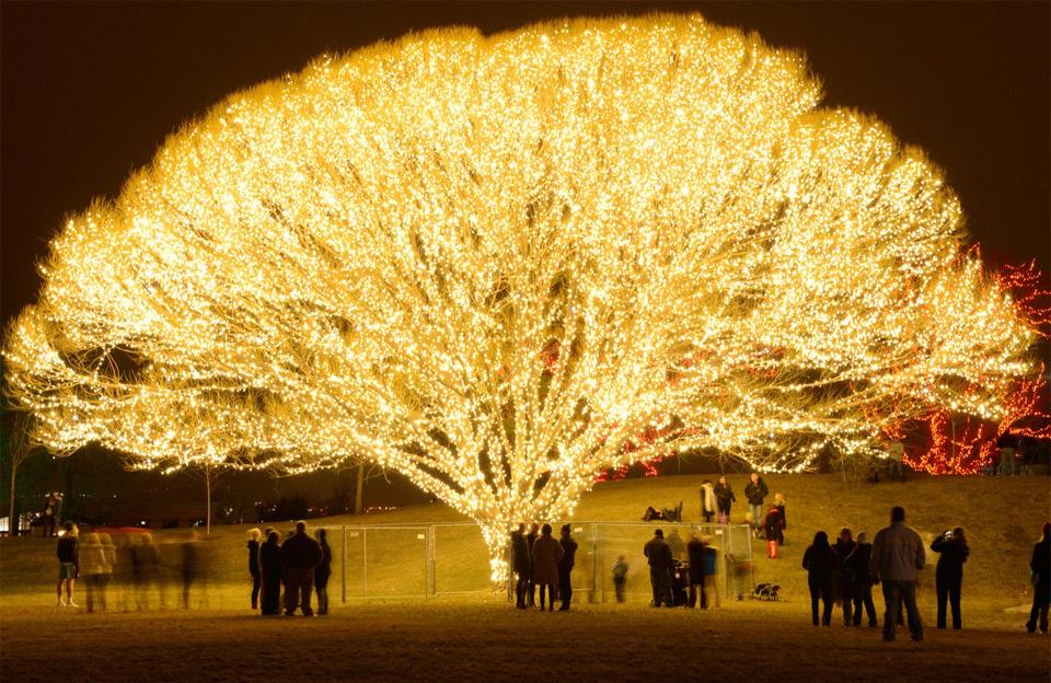 Ένα δένδρο με χιλιάδες φωτάκια | Φωτογραφία της ημέρας