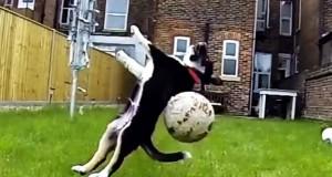 Σκύλοι που αποτυγχάνουν με ξεκαρδιστικό τρόπο στο να πιάνουν πράγματα (Video)