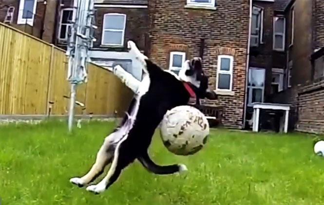 Σκύλοι που αποτυγχάνουν με ξεκαρδιστικό τρόπο στο να πιάνουν πράγματα