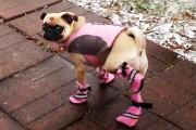 Σκύλοι που φοράνε παπούτσια