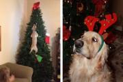 Σκύλοι στο κλίμα των Χριστουγέννων