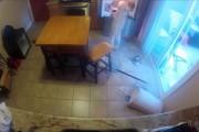 Σκύλος πιάστηκε στα πράσα από κρυφή κάμερα να κάνει επιδρομή στο ψυγείο