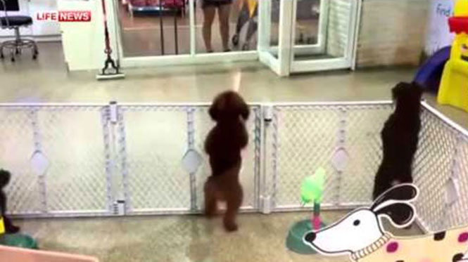 Σκύλος τρελάθηκε βλέποντας τον ιδιοκτήτη του