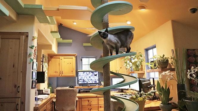 Άνδρας μετέτρεψε το σπίτι του σε παιχνιδότοπο για γάτες