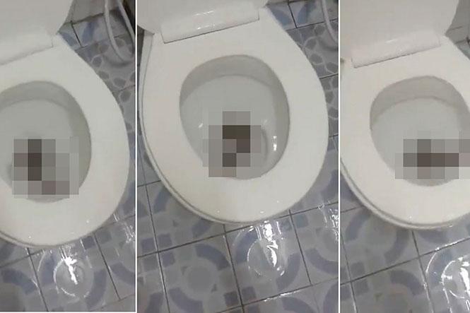 Αυτό που ανακάλυψε μια γυναίκα στην τουαλέτα της είναι κάτι που προκαλεί εφιάλτες
