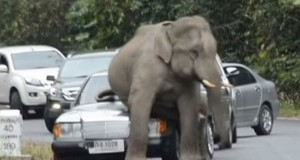 Ελέφαντας έσπειρε τον πανικό συνθλίβοντας αυτοκίνητα (Video)