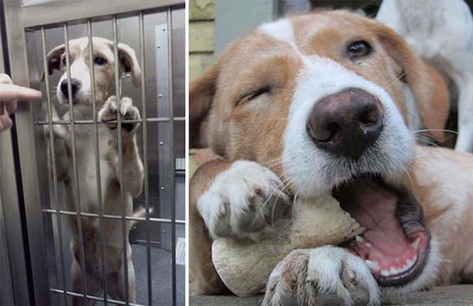 Σκύλος κατοικίδια ιυοθεσία