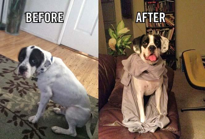 Κατοικίδια πριν και μετά την υιοθεσία (8)