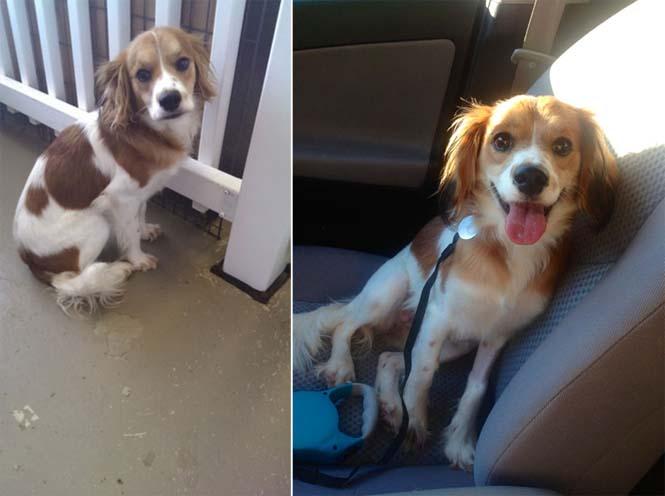 Κατοικίδια πριν και μετά την υιοθεσία (11)