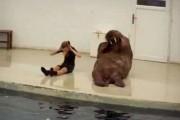 Το ξεκαρδιστικό μάθημα γυμναστικής ενός θαλάσσιου ίππου