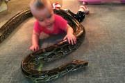 Μωρό παίζει με πύθωνα