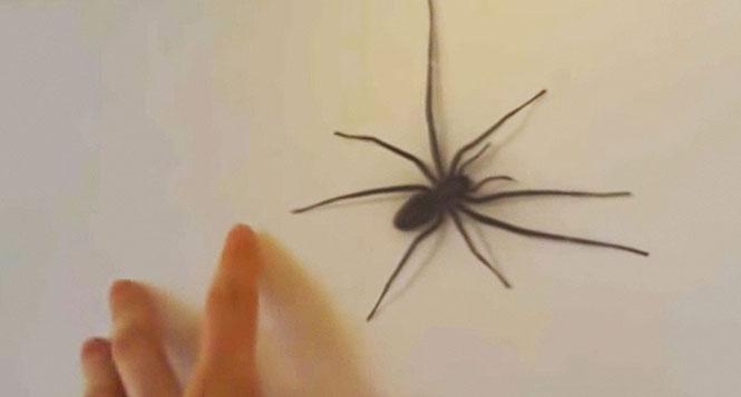 Να γιατί δεν πρέπει να παίζεις με την υπομονή μιας αράχνης