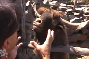 Παράξενες και ξεκαρδιστικές συναντήσεις με ζώα
