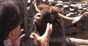 Παράξενες και ξεκαρδιστικές συναντήσεις με ζώα (Video)