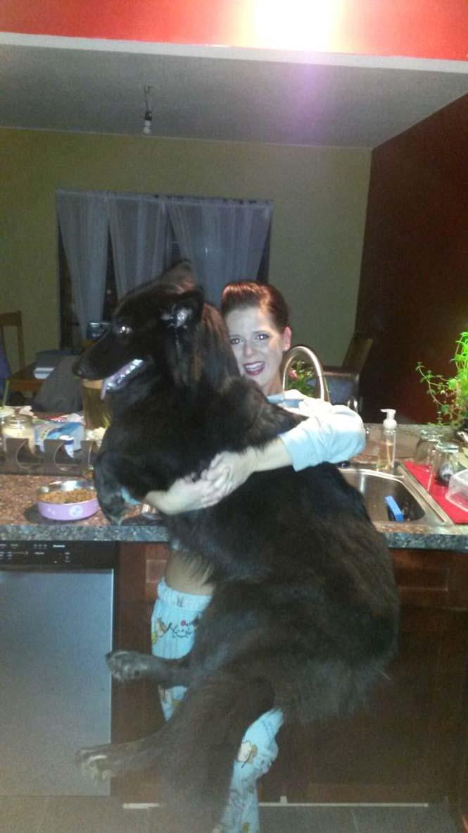 Σκύλοι που δεν έχουν καταλάβει πόσο τεράστιοι είναι (1)