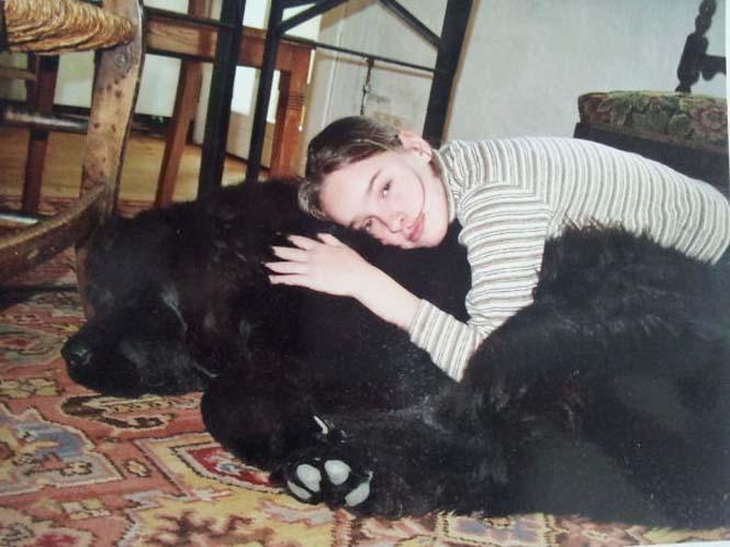 Σκύλοι που δεν έχουν καταλάβει πόσο τεράστιοι είναι (3)
