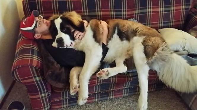 Σκύλοι που δεν έχουν καταλάβει πόσο τεράστιοι είναι (6)