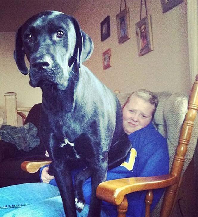 Σκύλοι που δεν έχουν καταλάβει πόσο τεράστιοι είναι (31)