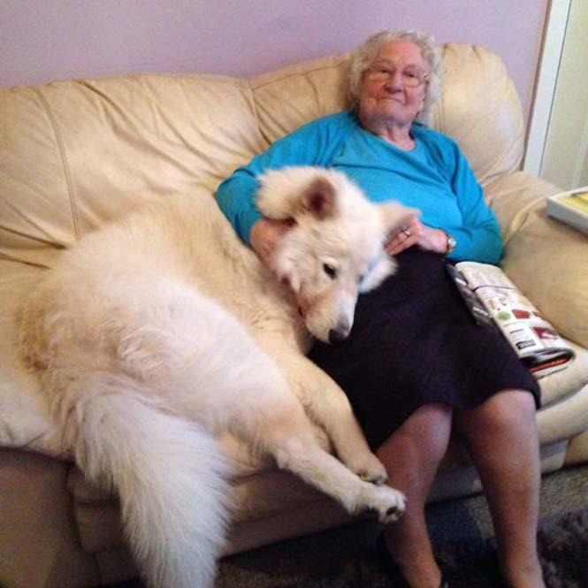 Σκύλοι που δεν έχουν καταλάβει πόσο τεράστιοι είναι (40)