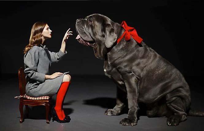 Σκύλοι που δεν έχουν καταλάβει πόσο τεράστιοι είναι (48)